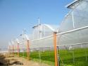 Промышленные фермерские теплицы - фотография №4
