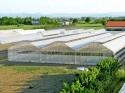 Промышленные фермерские теплицы - фотография №2