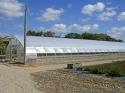 Промышленные фермерские теплицы - фотография №9