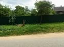 Продается земельный участок 10 соток в Калужской области - фотография №5